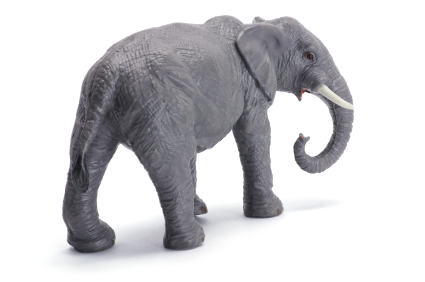 Six Lessons that Project Managers Could Learn from Elephants
